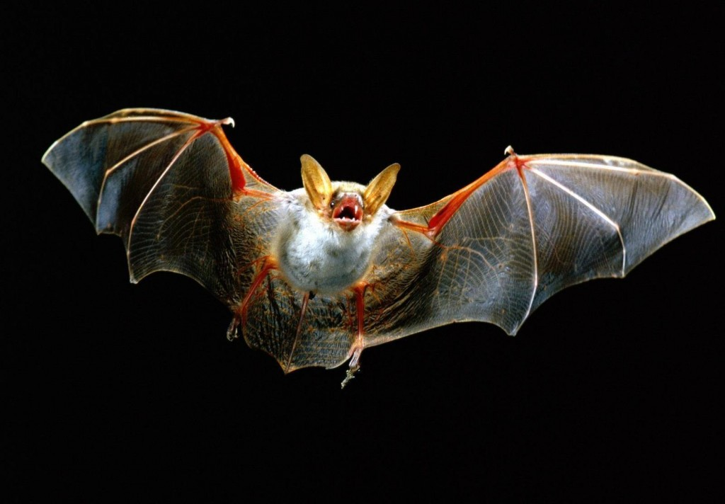 anatomy16 bat1 1024x712 Статья: Анатомия Смауга